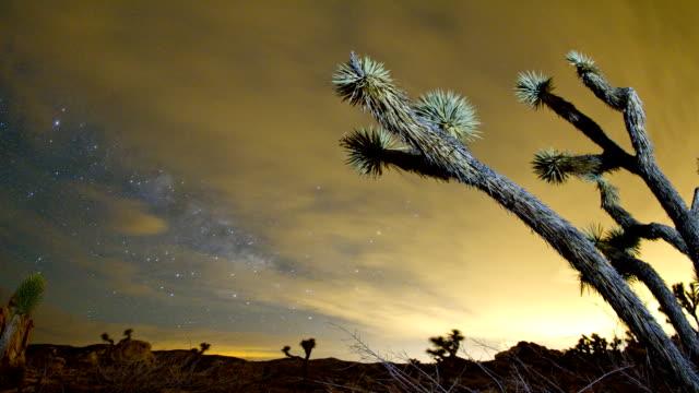 parco nazionale joshua tree - deserto mojave video stock e b–roll