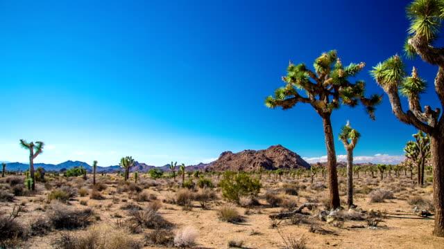 vídeos y material grabado en eventos de stock de parque nacional joshua tree - cactus
