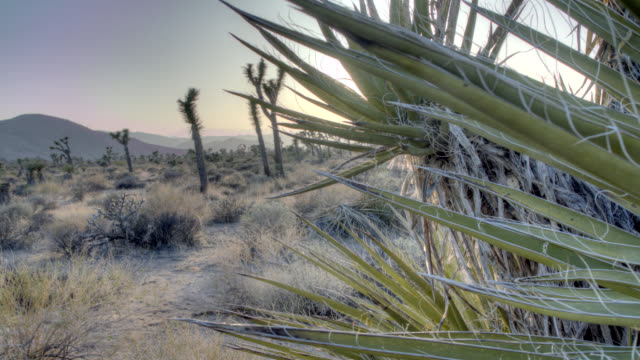 joshua tree national park - cactus sunset stock videos & royalty-free footage