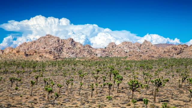 TIME LAPSE: Joshua Tree National Park