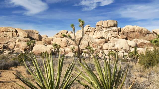 joshua tree national park - yucca stock videos & royalty-free footage