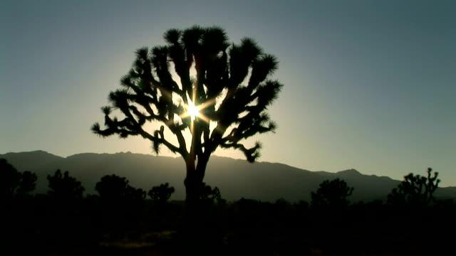 joshua tree national park - 熱帯の低木点の映像素材/bロール