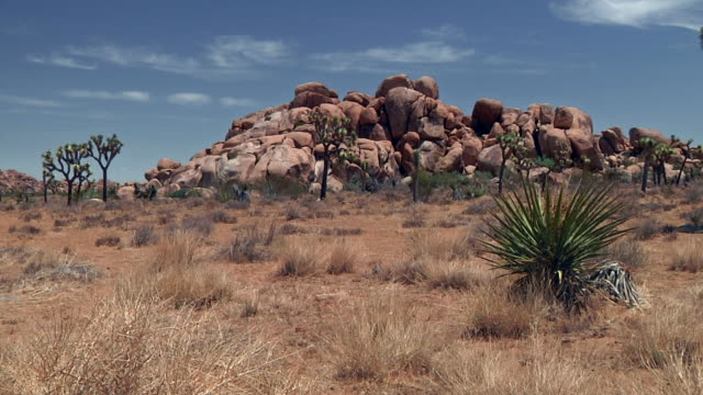 ws joshua tree national park with cactus and rock formations / joshua tree national park, california, usa - succulent plant stock videos & royalty-free footage