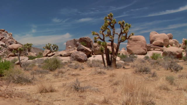 ws joshua tree national park with cactus and rock formations / joshua tree national park, california, usa - joshua tree national park stock videos & royalty-free footage