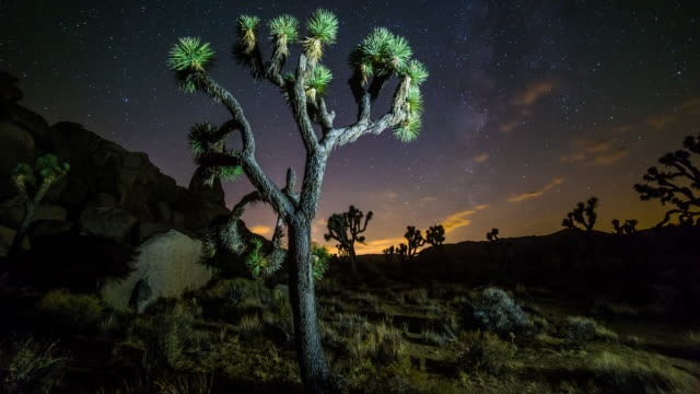 joshua tree nighttime timelapse - joshua tree national park stock videos & royalty-free footage