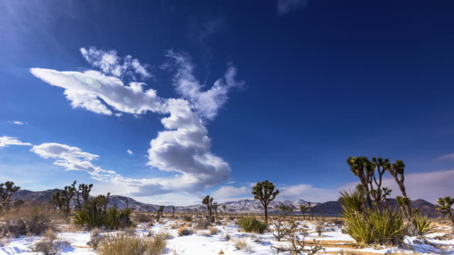joshua tree snow timelapse - joshua tree national park stock videos & royalty-free footage