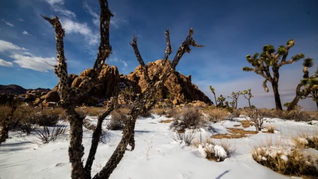 joshua tree snow timelapse - 熱帯の低木点の映像素材/bロール