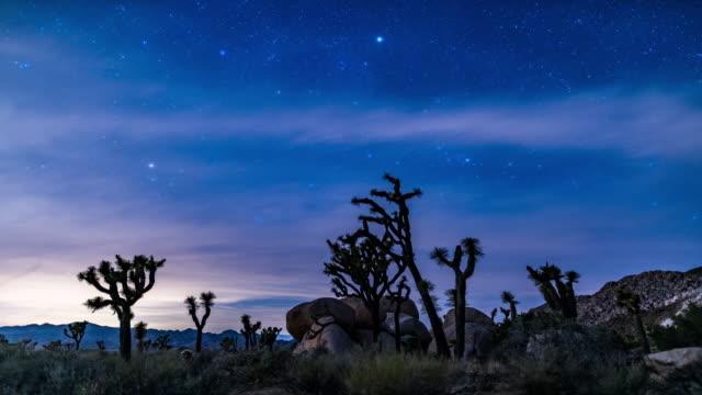 Joshua tree stars time lapse 4K