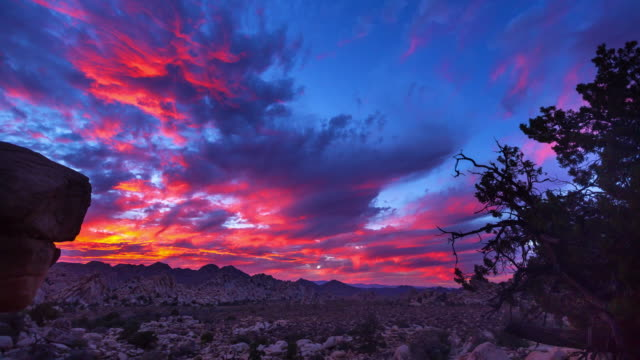 joshua tree sunset timelapse - joshua tree national park stock videos & royalty-free footage