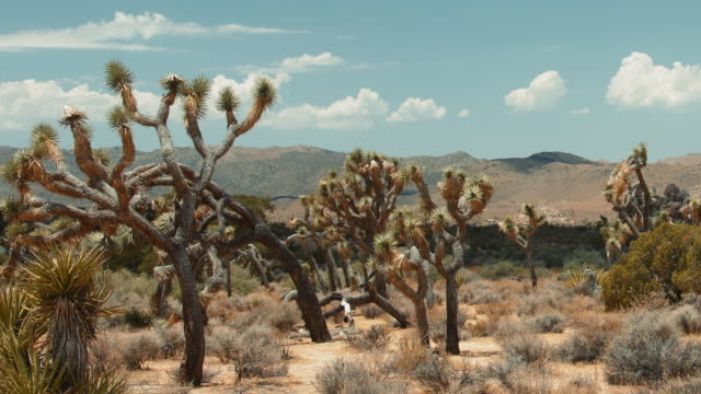 joshua tree time lapse 2 - joshua tree national park stock videos & royalty-free footage