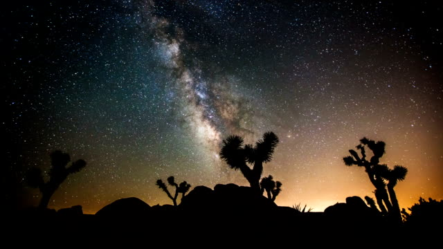 time lapse: joshua tree sotto la via lattea - cactus video stock e b–roll