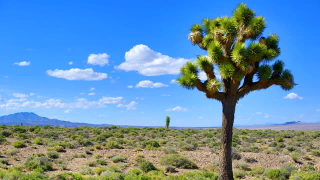 joshua tree - nevada stock-videos und b-roll-filmmaterial