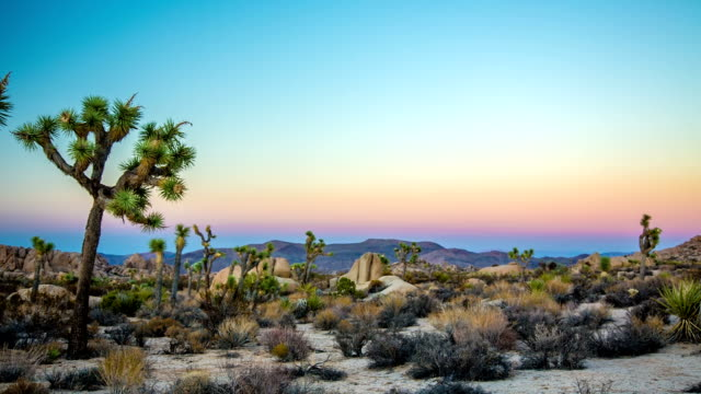 joshua trees in desert - joshua tree national park stock videos & royalty-free footage