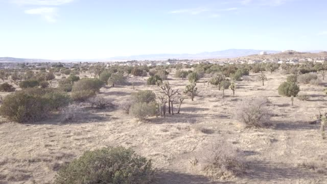joshua trees in palmdale california - palmdale stock videos and b-roll footage