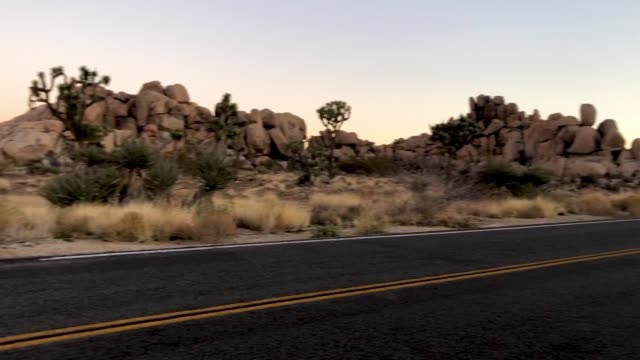 joshua trees stand at joshua tree national park on january 4 2019 in joshua tree national park california campgrounds and some roads have been closed... - nationalpark joshua tree stock-videos und b-roll-filmmaterial