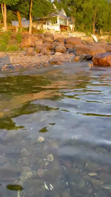 josina is at the lake with her two cats, loki and indy, who love to swim. her two cats wait for the paddle board to get closer to the shore before... - vermont stock videos & royalty-free footage