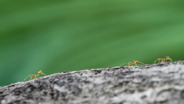 journey of the ant - twig stock videos & royalty-free footage