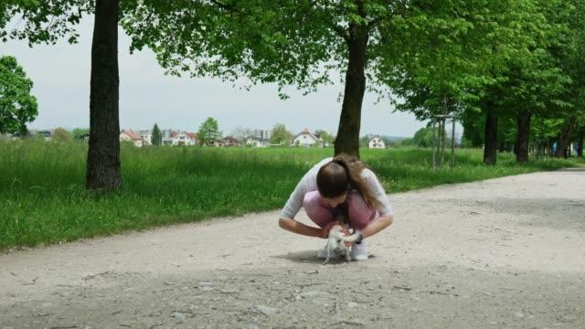 vidéos et rushes de chihuahua joyeux voyant son propriétaire après une longue période - non urban scene