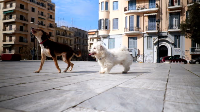 joyful dogs - two animals stock videos & royalty-free footage
