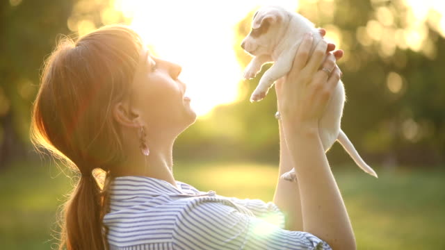 joyful mid adult woman taking care of her new jack russell terrier puppy she just adopted - puppy stock videos & royalty-free footage
