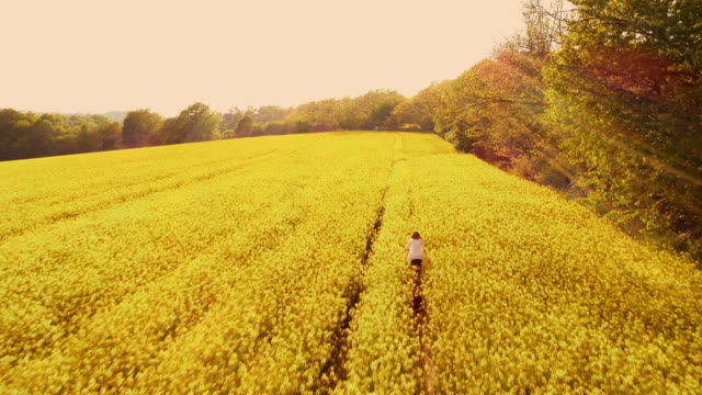 aerial joyful woman cycling with her dog in a canola field - oilseed rape stock videos & royalty-free footage