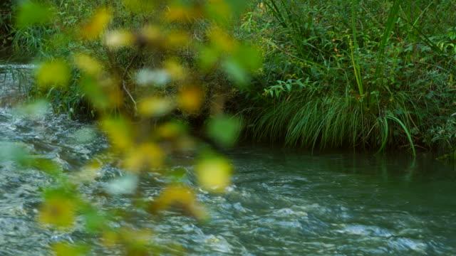 vídeos y material grabado en eventos de stock de jucar river in serrania de cuenca - río