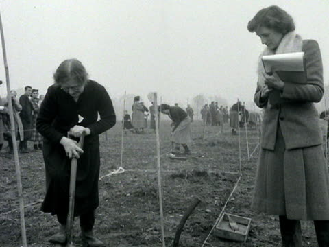 vidéos et rushes de judge watches an elderly woman digging up a plot of land during a digging competition. - concurrent