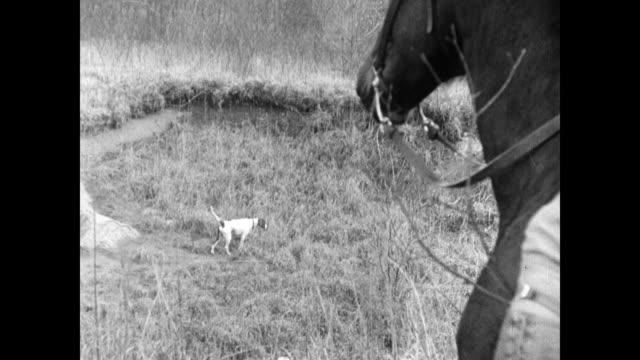 vidéos et rushes de judges on horseback td ws pointer dog 'sulu' standing frozen pointing w/ nose to grasses elder male hunter sportsman on horseback smiling - équitation de loisir