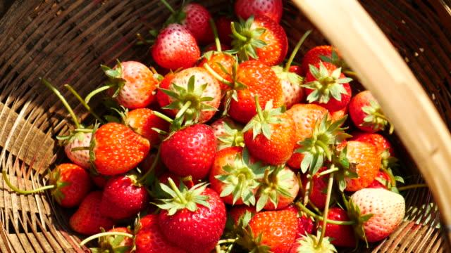 Saftiga jordgubbar med panorering rörelse, 4k(UHD)