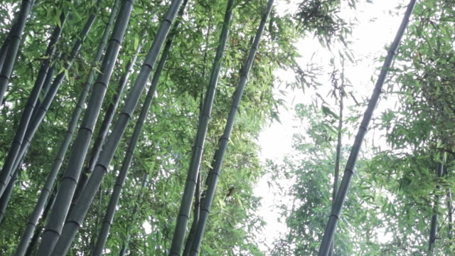 juknokwon bamboo garden / damyang-gun, jeollanam-do, south korea - damyang stock videos & royalty-free footage