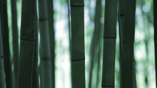 juknokwon bamboo garden / damyang-gun, jeollanam-do, south korea - 自然奇觀 個影片檔及 b 捲影像