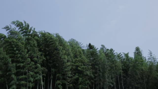 juknokwon bamboo garden / damyang-gun, jeollanam-do, south korea - jeollanam do stock videos & royalty-free footage