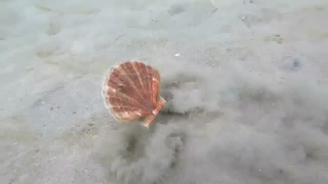 jules casey was freediving along victoria's mornington peninsula when she spotted a mollusc on a mission in port phillip bay. in this video, the... - mollusc stock videos & royalty-free footage