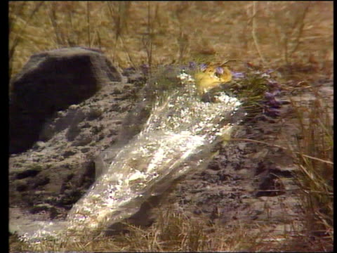 gamekeeper court case julie ward death gamekeeper court case lib masai mara game reserve water hole in game park cs cellophane wrapping on flowers... - cellophane stock videos and b-roll footage