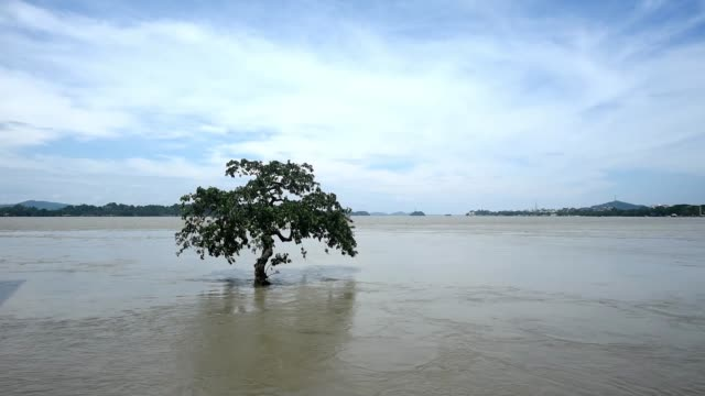 july 2020. a tree is seen submerged in the swollen brahmaputra river, following heavy monsoon rain, at kalipur area near guwahati, wednesday, july... - underwater stock videos & royalty-free footage