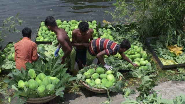 july 2020: papaya is being decorated for selling at singair near dhaka. (footage by palash khan/getty images - papaya stock videos & royalty-free footage