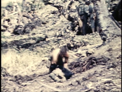 july 24, 1944 distant man with shirt off digging with a shovel with a dog laying in front of him panting / guam - guam stock videos & royalty-free footage