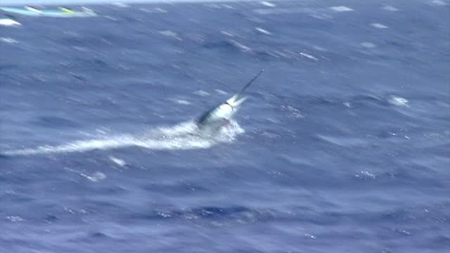 jumping billfish - fishing industry stock videos & royalty-free footage