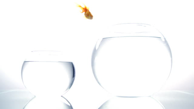 jumping gold fish.. - bowl stock videos and b-roll footage