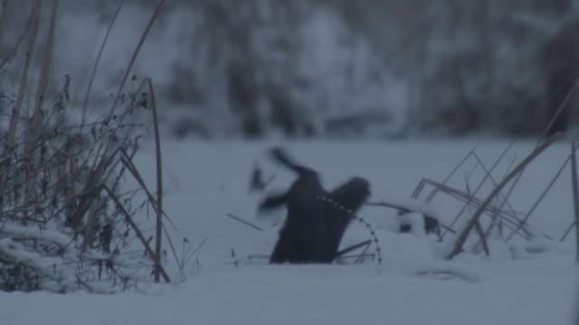 jumping otter - eurasian otter stock videos & royalty-free footage