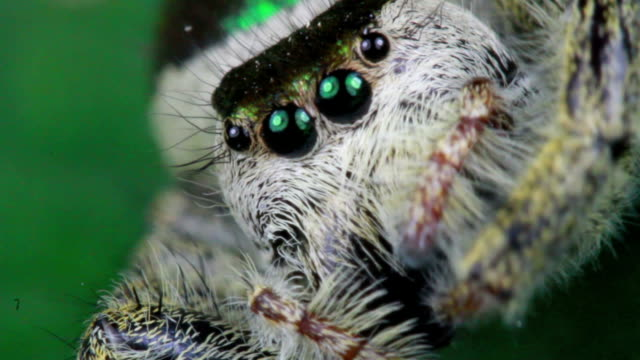 jumping spider - spider stock videos & royalty-free footage