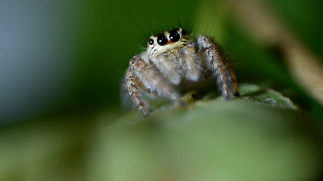 jumping spider - cute stock videos & royalty-free footage