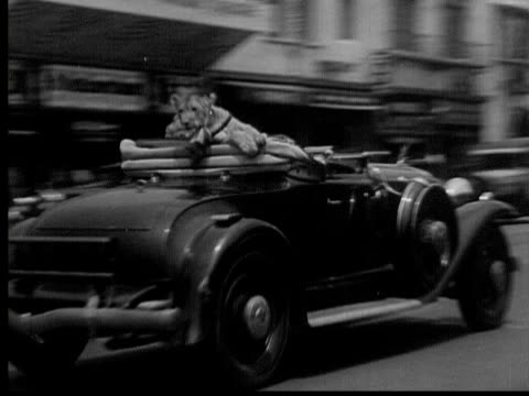 vidéos et rushes de june 20, 1934 b/w montage woman riding in car and walking down street with lion on leash, hollywood, california, usa, audio - animaux domestiques