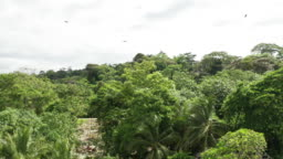 jungle aerial shot green trees