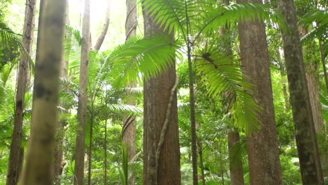 vídeos de stock, filmes e b-roll de jungle and forest trees - arbusto tropical