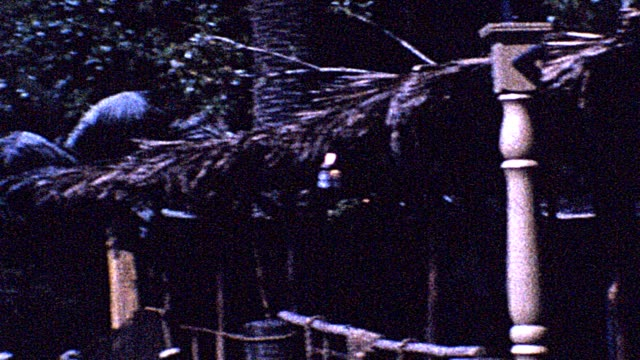 1962 jungle cruise - cruise collection stock videos & royalty-free footage