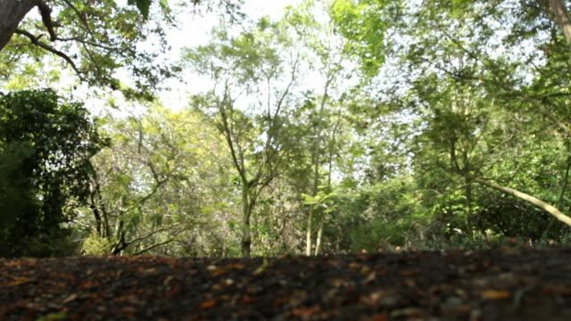 la jungle foliage at south coast botanic garden / palos verdes, california, united states - palos verdes stock videos & royalty-free footage