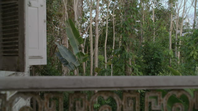 ms jungle foliage growing next to a porch railing / oahu, hawaii, united states - front porch stock videos and b-roll footage