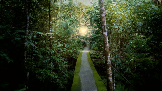 Jungle footpath to another dimension