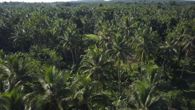 jungle forest and green field - papua stock videos and b-roll footage